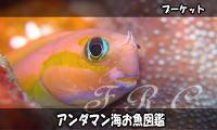 Andamanfish